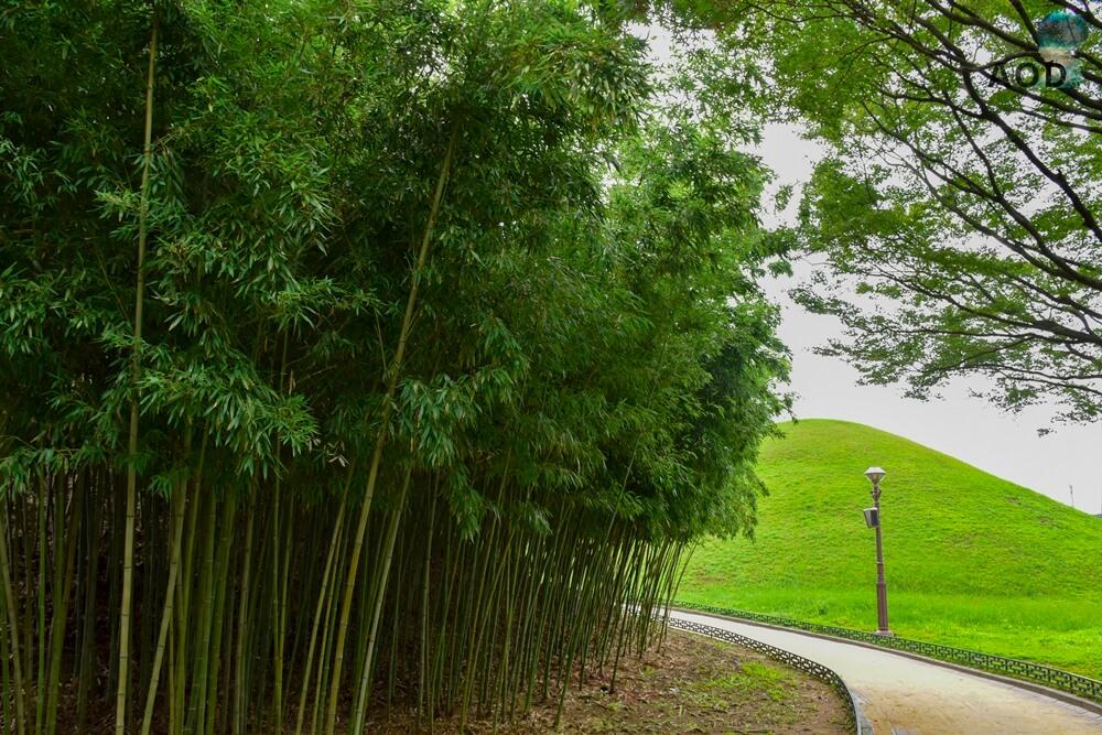 Bambus am Grab vom König Michu