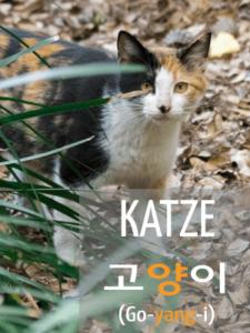 Koreanisch lernen - Katze
