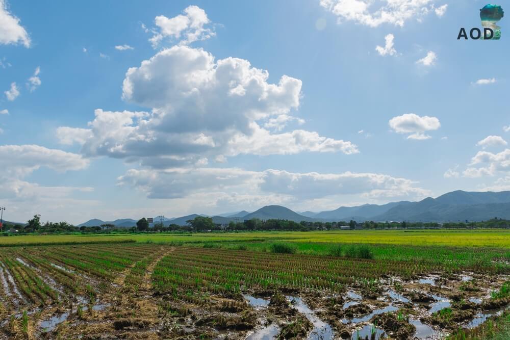 Süden Gyeongjus - auf dem Weg zum Oreung