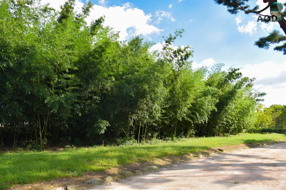 Auf dem Weg zur nächsten Sage, vorbei an einem kleinen Bambuswäldchen.
